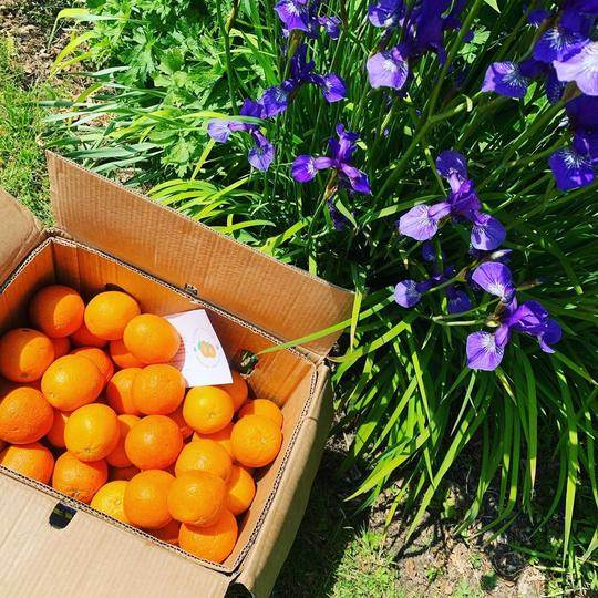 Spanish Oranges delivered to your door