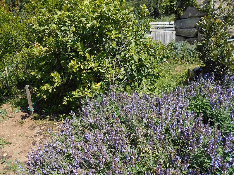 April in the kitchen garden - Companion Planting