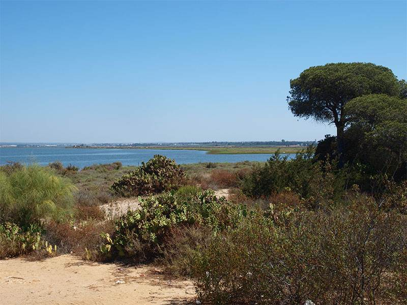 Guide to the Doñana Parque Nacional