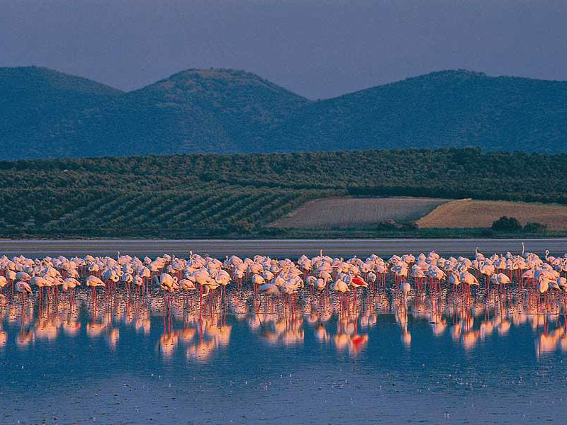 Flamingos at Fuente de Piedra