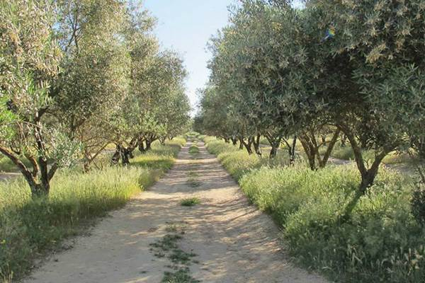 The path alongside the Rio Guadalquivir
