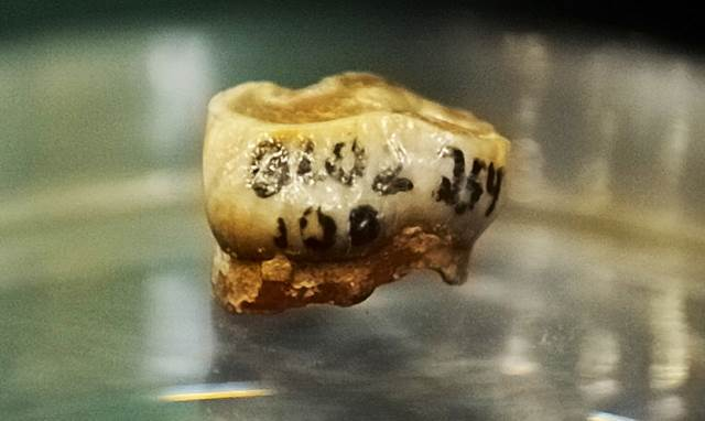 The disputed molar from Orce