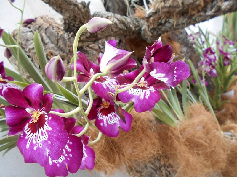 Orchid House or Orquidarium and Botanical Garden