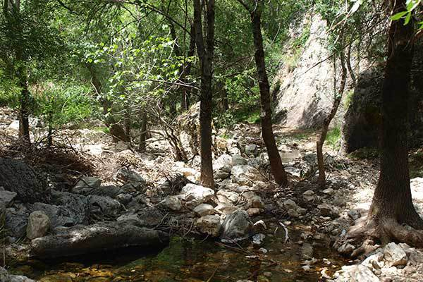 Looking downstream from the source